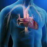 El Gen mutado que protege el corazón