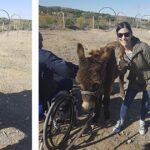 Therapy with donkeys